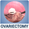 Ovariectomy in Dogs (Free Version)