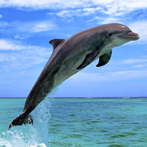 Dolphin Pics ! Lovely dolphin pictures for wallpapers and backgrounds iOS App