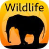 Learn by Example Wildlife Photography