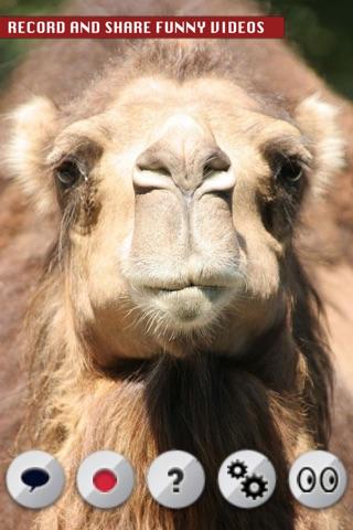 Talking Camel screenshot 2