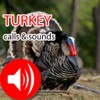 Turkey Hunting Calls & Sounds - Real Sounds
