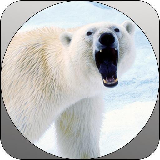 Deadly Wild Polar Bear Attack Simulator iOS App