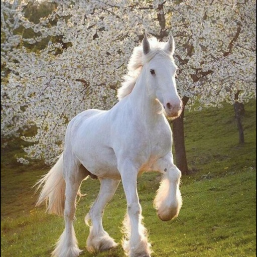 马的图鉴:Horses HD