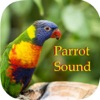 Parrot Sounds - Cockatoo,Caique,Kakariki