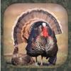 Turkey Hunting Calls
