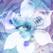 Blue Iris - Ken Pletzer