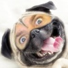 Dog Me!