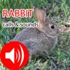 Rabbit Real Hunting Calls & Sounds