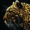 猎豹VPN-HK香港-最稳最快网络加速免费VPN