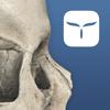AppSurgeOn - 3D Skull Atlas