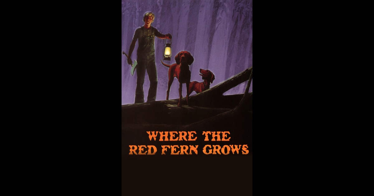 where the red fern grows perseverance