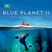 Blue Planet II - Blue Planet II  artwork