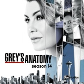 Grey's Anatomy, Season 14 (subtitled)